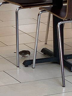 birds mall 7.jpg