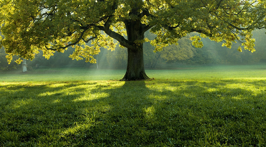 beautiful-tree-in-the-middle-of-field-co
