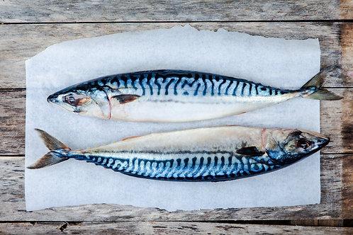 Wild Mackerel (whole)