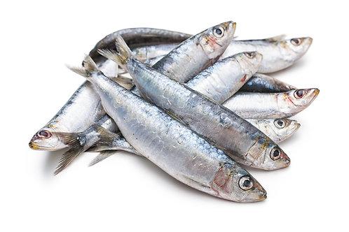 Cornish sardines (10, 20 or 30 pack)