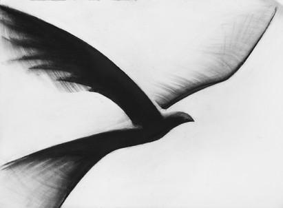 Flock V