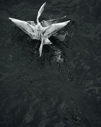 Loredana Nemes, Greed 07, 2014, silver gelatine print