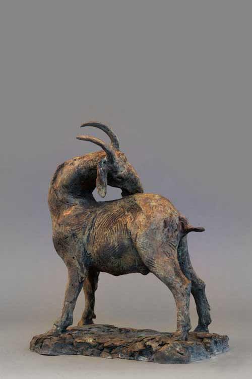 Scrathcing Goat 2
