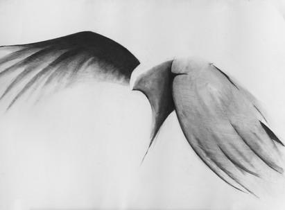Flock IX