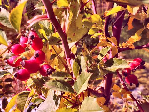 Herbstanfang- Halbzeit aus verschiedenen Perspektiven