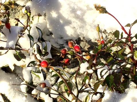 Wintersonnenwende 2017 – Die Wiedergeburt von Licht und Sonne - Der astronomische Winter beginnt