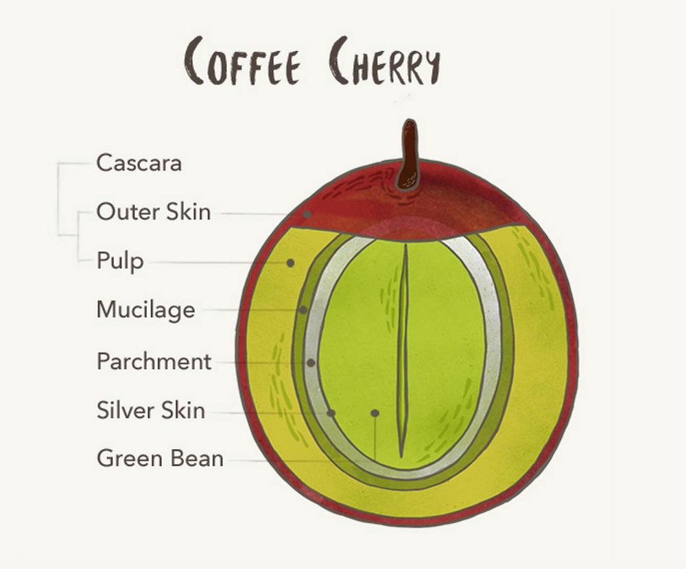 Cascara Coffee
