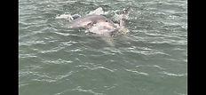 Three Dolphins.JPG