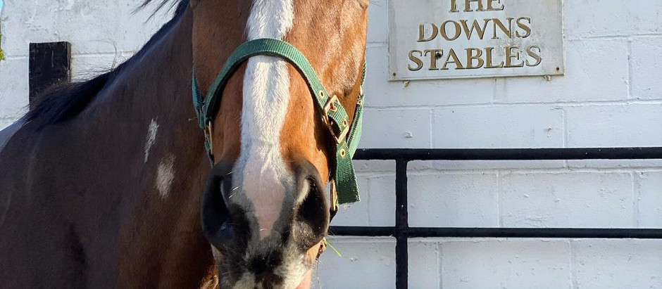Stable News - 14th January- Fontwell