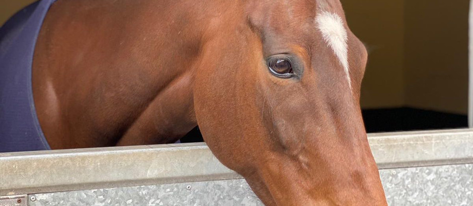 9th May- Stable News