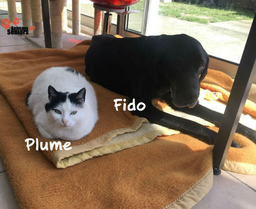 Fido 14