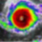 SOS animaux Guadeloupe Irma.jpg
