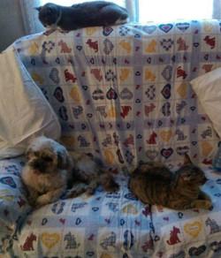 Tintin et les copains chats