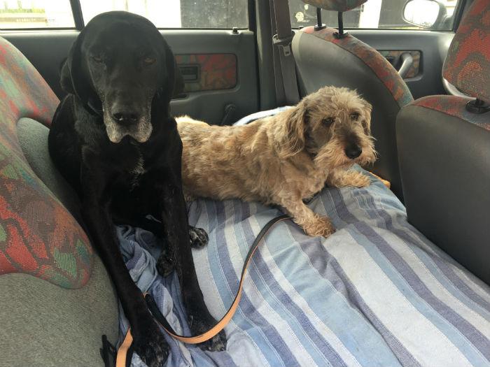 Fido et Didi en voiture