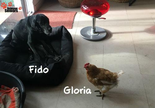 Avec Gloria