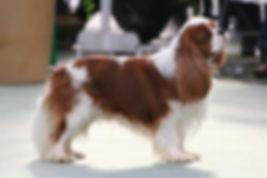 Adopter chien Tessa