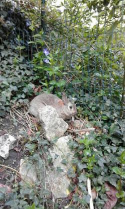 Loupi explore le jardin
