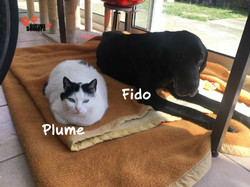Fido et Plume