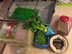 Nourriture, cage et coussins