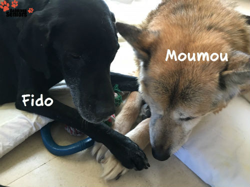 Fido et Moumou