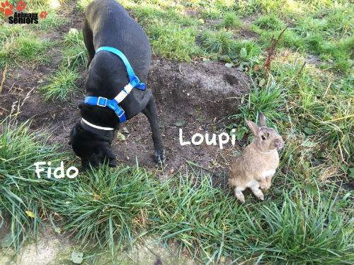 Fido et Loupi
