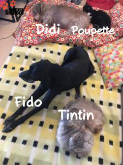 Fido, Didi, Poupette et Tintin