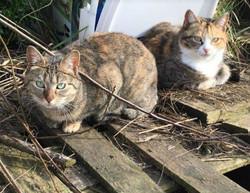 Gauffy et Lady