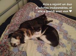 Azia (2)