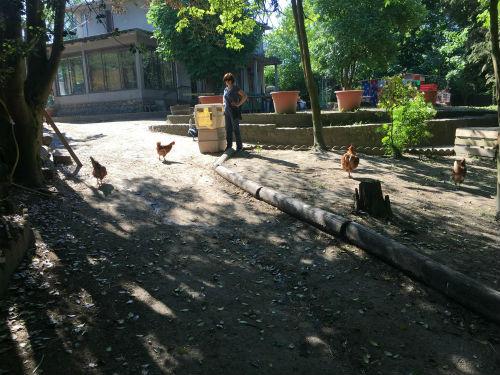 Heureuses poulettes