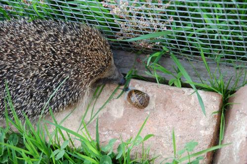 Miam un escargot !