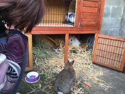 Les lapinous découvrent leur maison