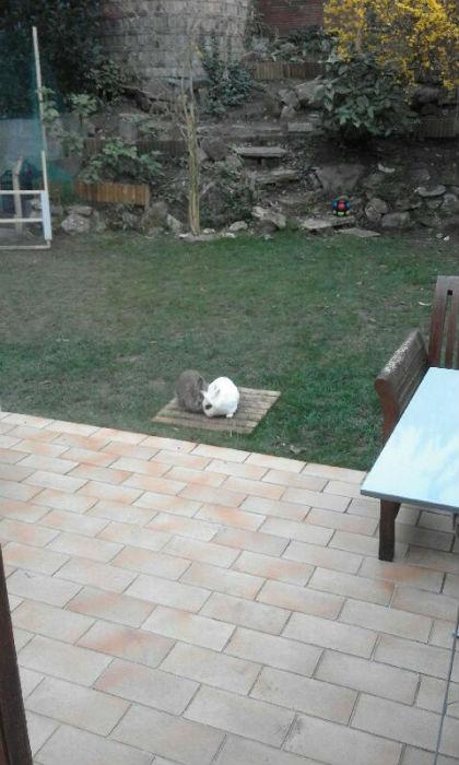 Loupi et neige dans le jardin
