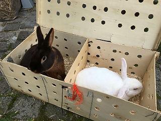 La boite où ils venaient enfermés
