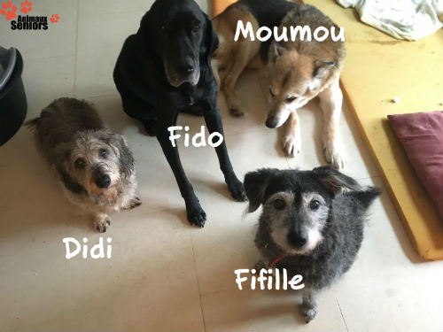 Avec Didi, Moumou et Fifille