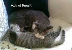 Azia (6)
