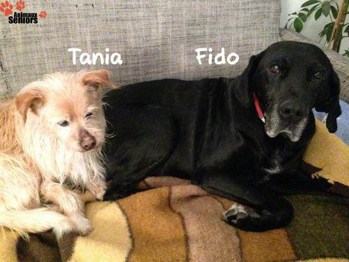 Fido et Tania
