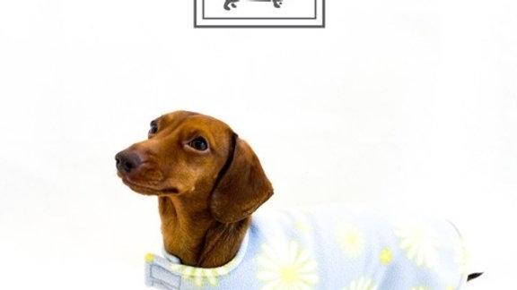 Sausage Dog Box Dachshund Designer Daisy Jacket