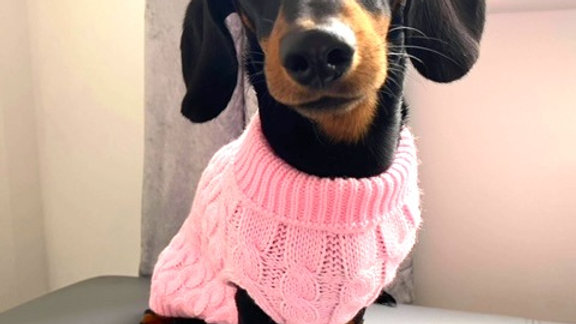 Sausage Dog Box Cosy Candyfloss Pink Cable Knit Dachshund Jumper
