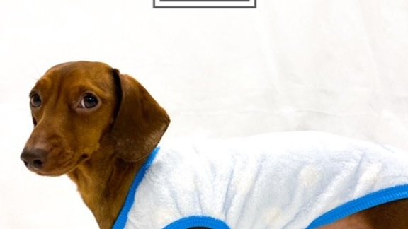 Sausage Dog Box, Dachshund Blue Birdy Pyjama / Jumper