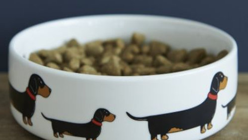 Sausage Dog Box, Dachshund Sweet William Bowl Dachshund Sausage Dog
