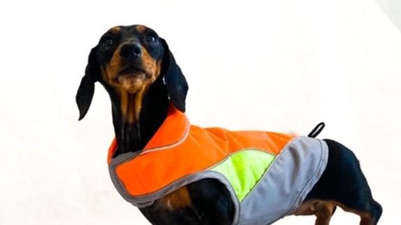 Sausage Dog Box, Dachshund Orange Reflective Waterproof Coat