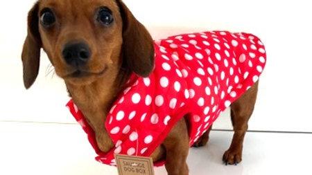Sausage Dog Box Polka Puffer Coat