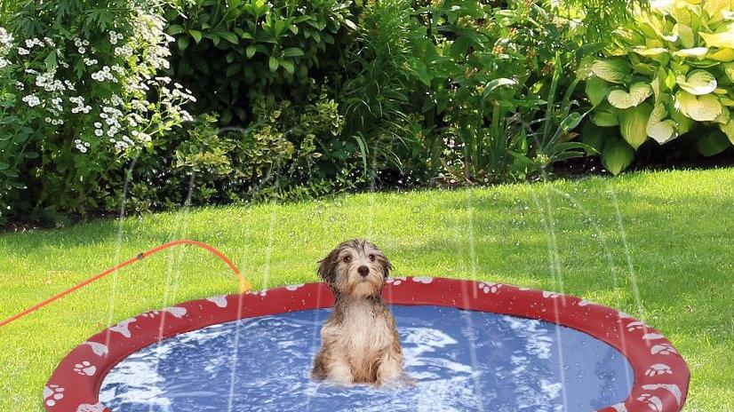 Sausage Dog Box Splash Pad Sprinkler Mat Pool