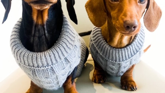 Sausage Dog Box Cosy Grey Cable Knit Jumper for Dachshunds