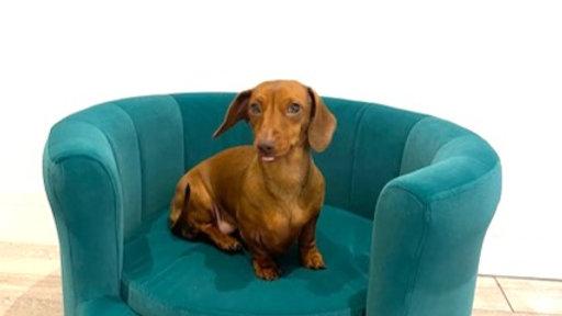 Sausage Dog Box Emerald Nest Shaped Sofa Bed
