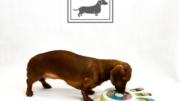 Sausage Dog Box Paw Anxiety Treat Puzzle
