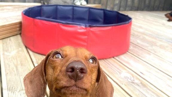 Sausage Dog Box Red Foldable Swimming Pool