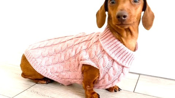 Sausage Dog Box Rose Pink Cable Knit Dachshund Jumper