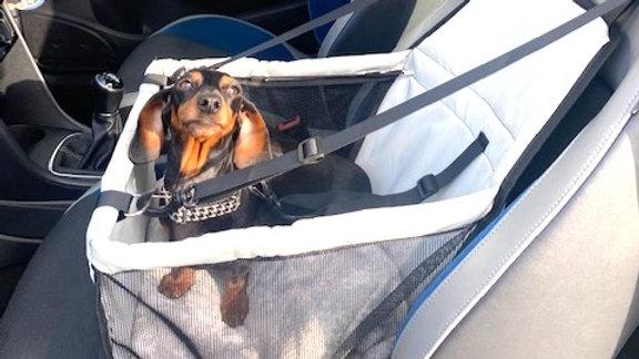 Sausage Dog Box Car Seat
