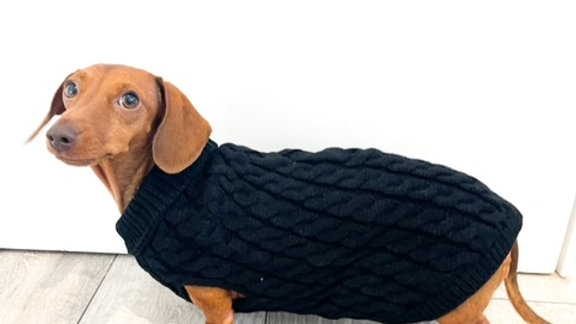 Sausage Dog Box Cosy Midnight Black Cable Knit Dachshund Jumper